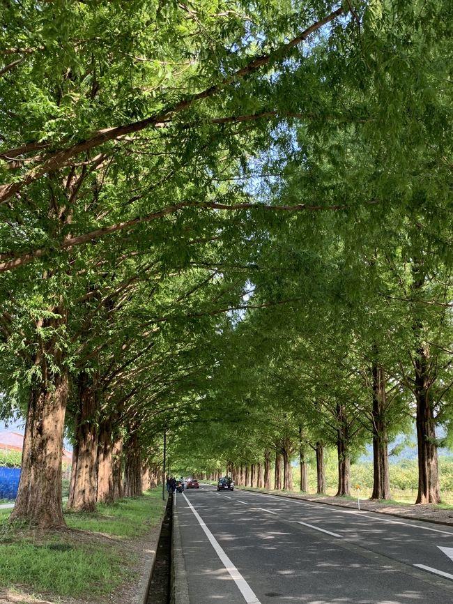 9月の4連休、、、<br />1日は出掛けられるかも!?と相方(^^♪<br />そうなると最近は自転車乗りに行こうって(笑)<br />先週は賢島で自転車を楽しみましたが、今週はどうしようかな!?<br /><br />以前から気になっていた「メタセコイア並木」。<br />秋の美しい風景を一度見てみたいっ!っと思っていたので、今回は下見(笑)<br />行先希望を言って相方に確認してOKがでた滋賀へ。<br />この4連休はお出掛けする人が多かったようで渋滞していて。<br />そんな事で少し渋滞に巻き込まれて片道3時間かかっての到着となったので、<br />自転車で走った距離は大した距離を走らずでしたが、<br />琵琶湖と高原の爽やか~な風を浴びながら超キモチイイ時間でした☆<br /><br />別日にも滋賀に行ったので合わせてアップさせていただきま~す(≧▽≦)<br />