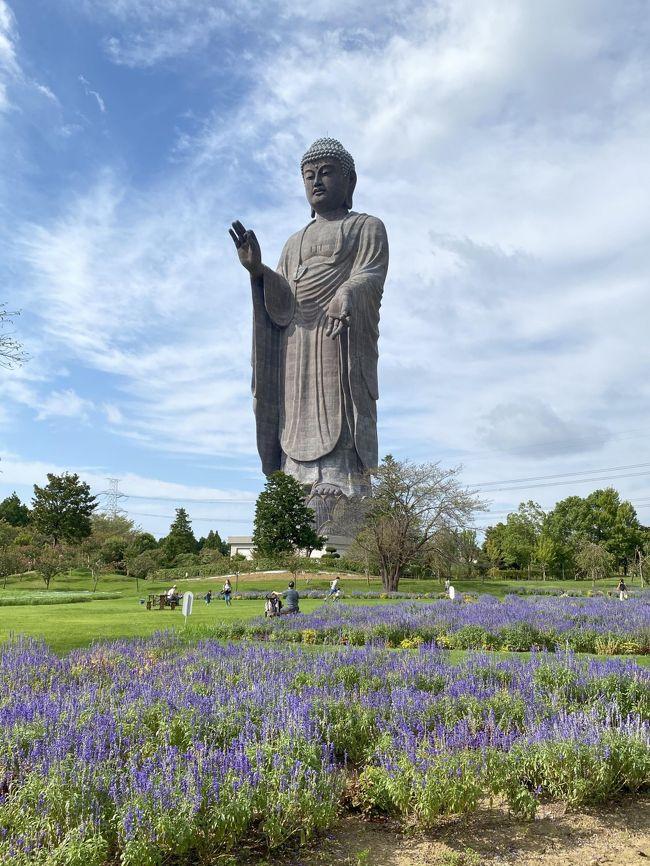 4連休も3日目になりました。<br />一昨日の成田、昨日の松島と、連日の遠出で少ししんどくなってきましたが、体に鞭を打って牛久大仏を観に行ってきました。