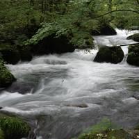 ずらし旅1 憧れの星野リゾートに泊まって、奥入瀬渓流散歩