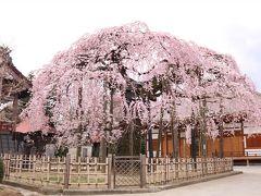 花見山と二本松の桜