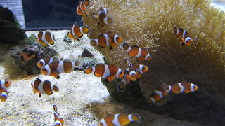 2020年9月 沖縄本島 その4 南部 主にDMMかりゆし水族館
