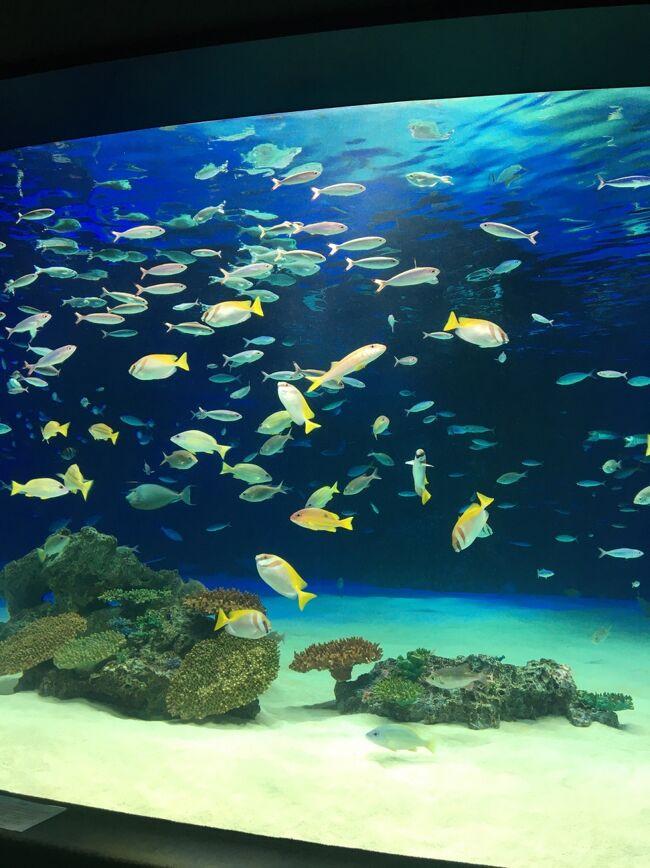 ナイトアクアリウム 池袋サンシャイン水族館 プリンスホテル 赤坂ランチ。