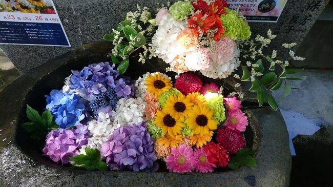 コロナ禍の中、使わないのならば手水鉢に花を生けようという取り組みが初めて行われました。花で受けつくされた手水鉢。全部で9か所ある神社をすべて回ります。今回は、手稲区と西区にある神社を巡ります。