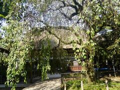 「里沼(SATO-NUMA)-「祈り」「実り」「守り」の沼が磨き上げた館林の沼辺文化」~もう一つの群馬旅は日本遺産。ちょっと渋めの散策です~
