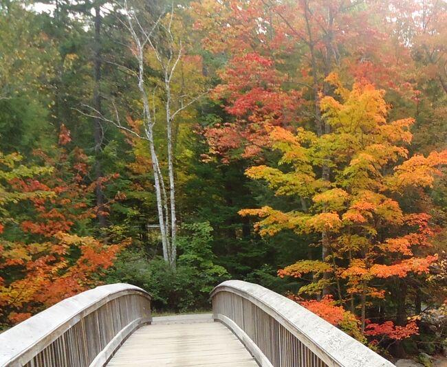 ロッキーゴージとは岩でゴツゴツした峡谷という意味です。スウィフト川もこのポイントの岩は水で削られにくいようで、川幅を狭くして峡谷になっています。このポイントを眺められるように、駐車場から美しいトレイルや風情のある橋まであります。冬は雪で真っ白、夏は青々した緑の木々の景色の場所ですが、9月28日の紅葉が美しい時期に訪れました。日本で見るような景色をアメリカで楽しみました。<br />