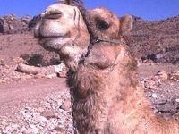 2001年 中東旅行-C(ヨルダン編)