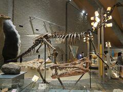 2020.10 群馬県立自然史博物館と近代美術館へ行ってきました(1)