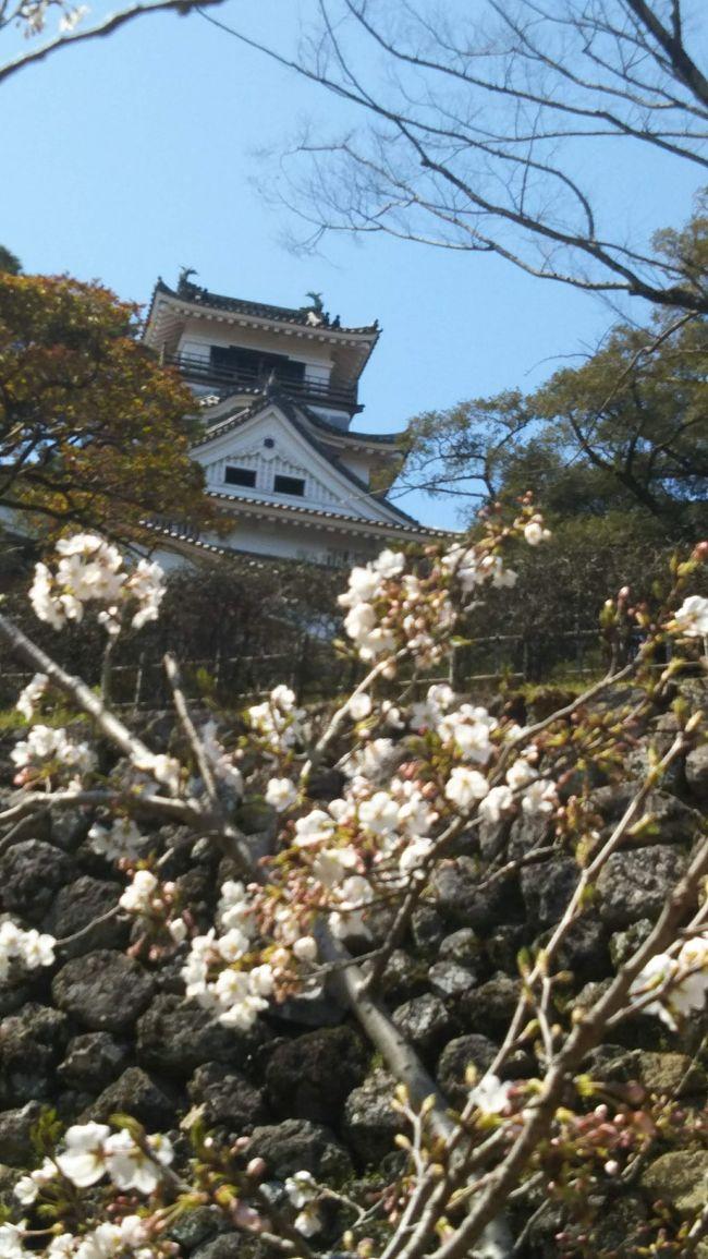 高知城<br />まだ寒さが続いて、さくらは、始まり、少し高知であっても、遅れ気味の春でした…でもその日は急にお昼頃から温かい太陽で。<br />見る見る咲き始めたのでした。<br />そんな高知城をプラプラお散歩