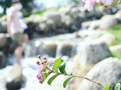 1歳10ヶ月の子連れで山梨のフルーツ公園