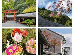 奥嵯峨と嵐山で、秋の景色を満喫♪