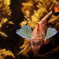 クラゲの水族館でキタゾウアザラシに会ってきたお話 4 マリンピア日本海の部