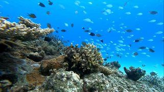 慶良間ブルーに魅せられて 今年3度目の沖縄はまたしても離島旅 3泊4日 ウミガメちゃんと体験ダイビングPart2