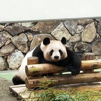 Go toトラベルで、飛んで和歌山! パンダも宿坊体験も その3:雨のアドベンチャーワールド