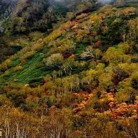 白馬(五竜・栂池・八方尾根) 霧の中の紅葉