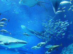 本部_Motobu 美ら海!ジンベエザメが泳ぐ『黒潮の海』と昔ながらの沖縄そば