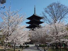 京都桜紀行2020