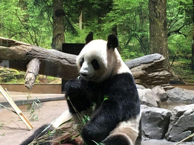 2020パンダ鑑賞記録☆パンダのもりを視察☆上野動物園☆ついでに人形町食べ歩きと日本橋起点を視察