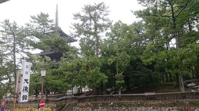 go to トラベル! go to eat !<br />で、今度は奈良です!<br />奈良公園の鹿さんにあいにきました!<br /><br />母と、孫とのぼちぼち旅行です。<br /><br />前回徒歩18分は母と孫にはきついとわかったので、今回はホテル前が五重塔!鹿もいるし、見えます!これでどうだ!?て。感じです。<br /><br />