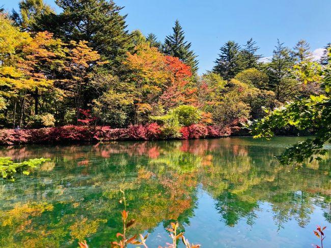 35年ぶりにGotoトラベルを利用して1泊の軽井沢家族旅行に行ってきました。初日は天気も良く紅葉が始まりかけた軽井沢を満喫できましたが、二日目は冷たい雨が一日中降り続き、外歩きをあきらめ、妻娘に付き合っての軽井沢プリンスショッピングプラザでのショッピングとなりました。<br />今回の旅行の予約は、Gotoトラベルキャンペーンを利用して、旅行会社で往復の新幹線と軽井沢プリンスホテルイーストの2食付きをを申し込みました。従い旅行代金3人で約9万円の35%の割引があり、千円の紙クーポン券が13枚いただけました。<br />9月初旬の予約の時は旅行会社の窓口はそんなに混み合っていませんでしたが、クーポン券と列車の切符を取りに出向いた10月初旬には、大変混み合っておりGotoトラベルキャンペーンの利用者が大幅に増加したことが見て取れました。<br />