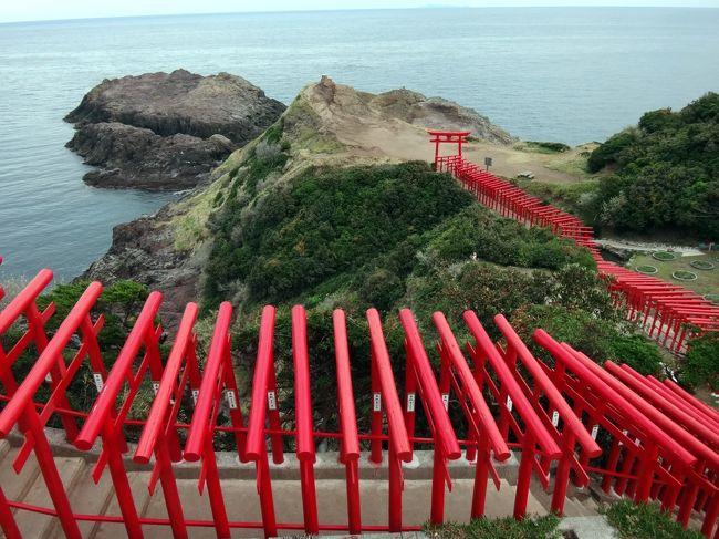 九州ドライブをする時に、車の多い山陽道を避けて、日本海沿いを走るのが好きな私が、数年前に見つけた、青海島。<br />今回は、3度目の立ち寄りです。<br />角島大橋を渡っていく、角島も素敵ですし、日本海側から、下関に向かう国道もまた、海沿いを走る、素敵な道路なんですよね。<br /><br />今回は、いろいろこまめに回ろうと思い、油谷湾の宿に連泊しました。<br />土曜日の松江から浜田市の移動は、車が多くていやになりましたし、日曜日の青海島も悲惨な混み具合でした。<br /><br />車のいない道をのんびりドライブできたはずなのに、今回は、交通量がものすごく多く、道の駅は満車で、人がうようよしてました。ファミレスのジョイフルも、こんな混んだ日はいやだし、と、とうとうランチは食いっぱぐれました(笑)。<br /><br />油谷湾の宿は、とりあえず素泊まりで予約して、その後、食事付きに変えようかと試みた時には、だいぶ手前でチェックしたにも関わらず、満室気味でした。そして、チェックインした時に、フロントの方曰く、な、な、な、なんと、来年の1月末まで、毎日毎日ずっっっっと満室だそうです。<br /><br />やっぱり、ものすごいGo to キャンペーンの効果です。<br />そして、表紙の写真にした、以前、京都の伏見稲荷の近くに住んで、あのお山をウォーキングルートにしていた私から見たら、どうってこない、この鳥居の元乃隅神社が、何かのランキングに紹介されたとかで、日曜日は、宿から15分の距離の神社に、1-2時間の渋滞が発生したそうです。<br /><br />パワースポットのブーム、そしてまた、インスタ映えの人気で、青空と赤い鳥居の対比が美しく、今、人気大絶頂です。週末には、近寄らないことをお勧めします(笑)。<br /><br />フロントで、詳細な地図をいただいて、私は、連泊の二日目、月曜の朝、みなさんが旅館の朝食を召し上がっている時間帯、朝7時ごろに出て、神社を目指しました。<br />おかげで、通行量はほとんどなく、また、神社の脇には、第一、第二駐車場も完備され、斜面を利用して、上手にたくさんの台数を停めれるように工夫されてました。<br />朝7時過ぎに、すでに整理案内の人もいて、車も5台ほどはとまってました。<br /><br />ナビに出ないのですが、元乃隅神社ではなく、「龍宮の潮吹」、という名称で入れると、ナビに出てきました。<br />村の道路は、基本的に二車線ありますが、神社へのアプローチは、数キロぐらいかしら、部分的にすれ違い不可の隘路です。そりゃあ、ここをサンデードライバーが行けば、渋滞するでしょうね。<br /><br />ここのもう一つの名所、「千畳敷」は、広々とした草原で、広々とした駐車場もトイレも完備しているし、ここまでなら、二車線の道路がついていて、アプローチも楽です。<br /><br />この神社はもう、2度と行きません(笑)。<br /><br />今回、月曜日には角島も、青海島も、スイスイと走りましたが、私はやっぱり、青海島が大好きです。遊歩道は、階段が多くて、今回はパスしましたけど、天気がめっぽう良かったので、海を見ながらドライブするのが、素敵でした。<br />(その大好きな景色は、ドライブ・スルーで楽しんだので、写真はなく、ごめんなさい。)
