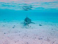 【モーレア島】これぞ楽園!サメとエイと熱帯魚と戯れる|タヒチでクジラと泳ぐ旅②