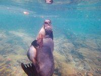 【イサベラ島】絶景!ウミガメだらけのシュノーケリング|ガラパゴス滞在記③
