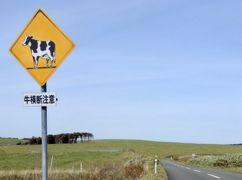 豊富温泉2日目 大規模草地牧場 絶景「サロベツリフレッシュロード」