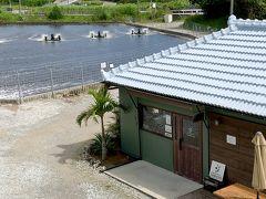 【沖縄島北部】お勧めランチは養殖場直営店「くるまえびキッチンTAMAYA」と昔ながらの美味しい食堂「守礼」
