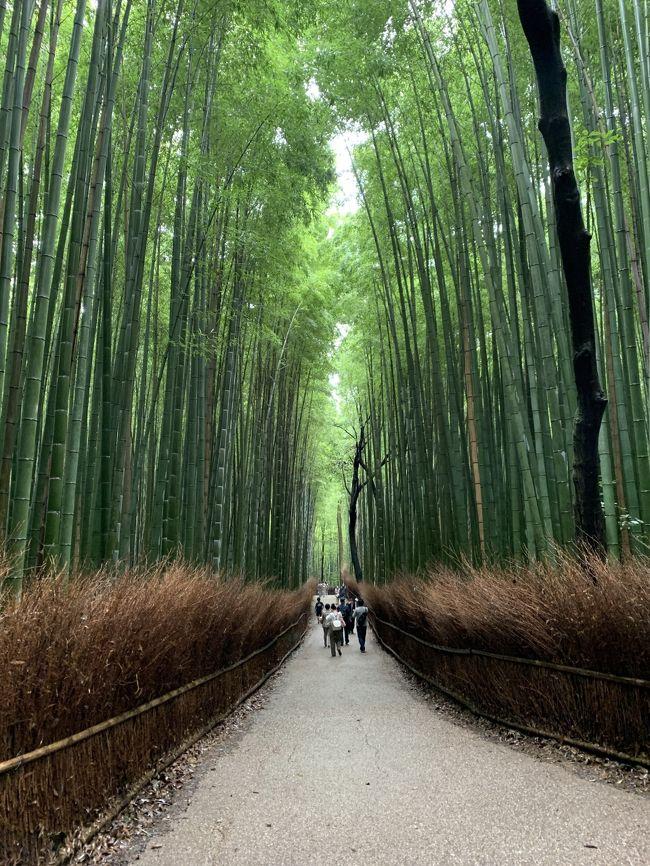 """名古屋に住んでいる友人から """"アマン京都でアフタヌーンティーしない?"""" と誘われ """"行く!""""と即答。<br /><br />せっかくだから1泊しようとなりましたが、一番行きたかった源光庵がまさかの休業中!<br /><br />時間も限られていたので観光案内所の方にお勧めしていただいた企画の通りに動き、結果最高に美しい旅となりました。<br /><br />神社仏閣は全く訪れなかったけれど、さすが、プロの計画は凄いと痛感~、案内所のお姉さんありがとうございました!"""