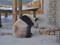 【 本日(10/24)のパンダ 】と【 自動焼鳥機 】