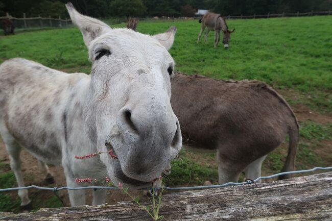 前夜に青森旅行から戻り、残り1日となったJR東日本「大人の休日倶楽部パス」を使って、日帰りで那須の自然を満喫してきました。<br />那須岳は3年前に登ったので(ロープウェイで^^)今回はパス。<br /><br />午前中は一軒茶屋バス停を基点に南ヶ丘牧場で放牧された動物たちに癒され、11時30分~営業開始のアメリカンスタイルのステーキ店「ミスタービーフ・ダイニング」でランチ。レトロアメリカンを感じながら自慢の赤身ステーキにご機嫌。(^O^)