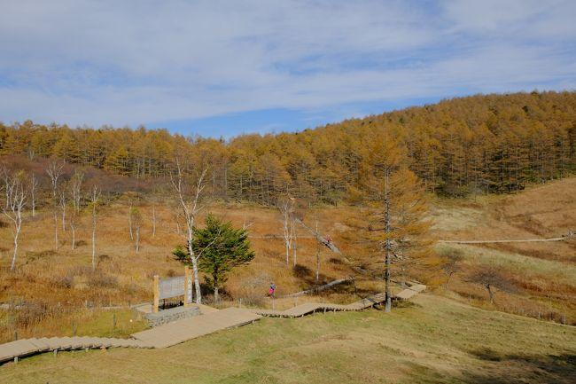 黄葉真っ盛りの入笠山に登りました。<br />お昼は絶品ビーフシチュー。目的はこっちだったかも!