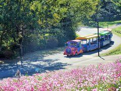 東京・秋の昭和記念公園~コスモス畑と銀杏並木(2020年10月29日)