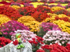 伊賀野の花畑 ver.Kogiku