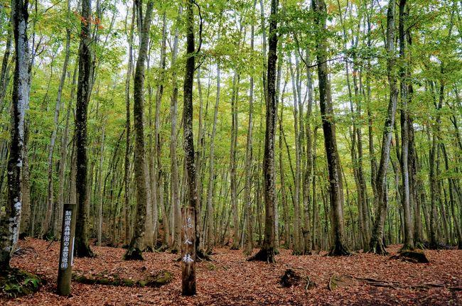 秋の紅葉を目的に、湯沢・津南・秋山郷など、1泊2日で新潟南部エリアに行って来たときの備忘録です