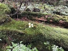 勉強になった屋久島の旅(縄文杉に会えなくリタイア組)