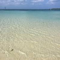 2泊3日の初沖縄 一人旅 その2 美ら海水族館 今帰仁城 沖縄北部の旅