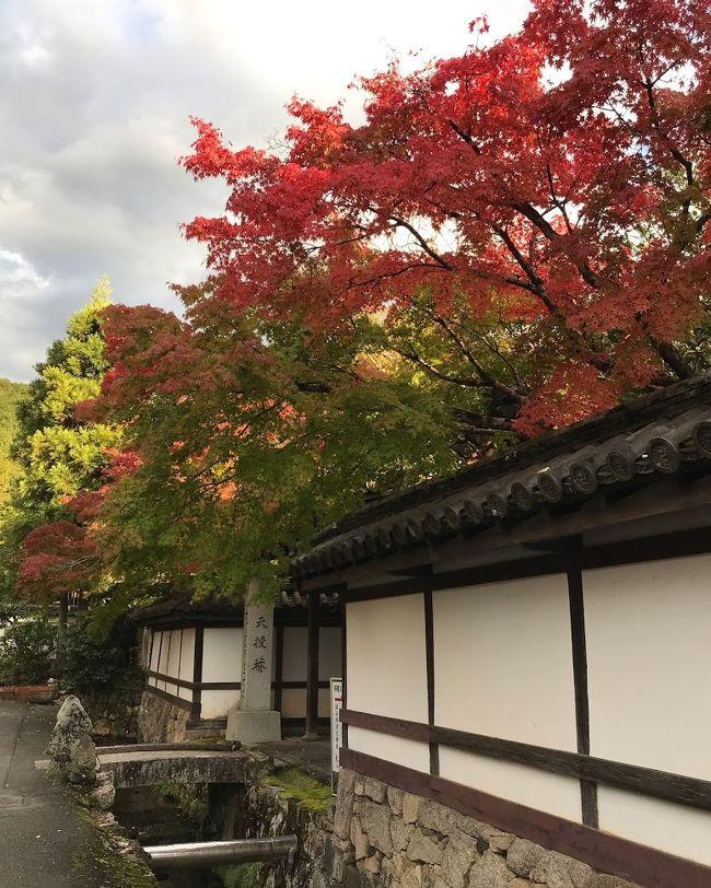 先月の事(一つ前の旅行記)<br />今年最初の旅行記 そして今年最初の旅を書きました。<br />その時、ちらっと書いたのですが。<br />キャンペーンを利用すると、実質6000円で日帰り京都旅が出来て。<br />「また行きたい」と書いてましたが。<br /><br />ちょうど一ヶ月後の11月3日。<br />再び、キャンペーンで京都に行って来ました。<br /><br />前回の京都旅を見て頂けると分かると思うのでうが、前回は「何も調べないで行く」って旅だったので。<br />結構ミスってしまった部分がありました。<br /><br />その一つに長楽館の特別公開が含まれてて。<br />前回はそれに気づかずに見る事が出来ませんでした。<br /><br />それなので、今回の目的は長楽館に行くって事です。<br /><br />そして、このひと月で人の流れが変わってました。<br />京都に観光客が多くいるって印象でした。<br />また、前回は隣に誰も座らなかった新幹線ですが。<br />今回の帰路の列車は人が多かったのか、隣にも人が座ってました。<br /><br />兎に角、京都に人が戻ってきた!って喜びがあった今回の旅です。