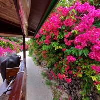 マイルで旅する石垣島&竹富島.:*゚..:。:.竹富島