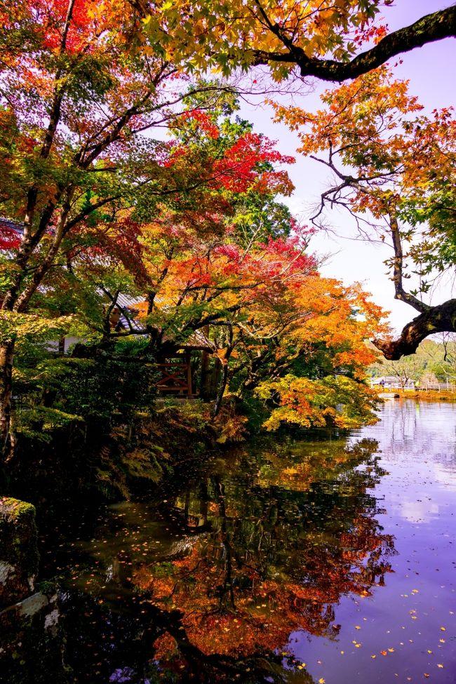 県内でもトップに紅葉が色づく、清川の宝生寺と朝地の用作公園へ行ってきました。
