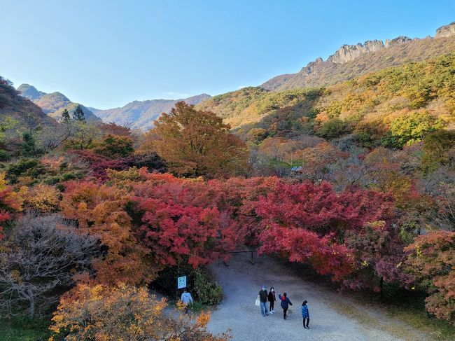 <br />去年に引き続き、今年も韓国国内で紅葉狩りに出かけてきました。<br /><br />本当は…今年は京都に紅葉狩りに行こうと考えていたのですが…<br />コロナのせいでいまだ海外との往来もままならず、断念。。<br /><br />自由に海外旅行が出来ていた頃がなんだか夢か幻のようです。<br /><br /><br />日本ではGo to トラベルなどで国内の消費喚起がなされているようですが、韓国はいまだ自粛ムードです。。<br /><br />とは言いつつ、やはりどこにも外出できないままずーっと過ごせるわけもなく、国内の観光地はそこそこにぎわっているようです。<br />今回は主人が出張で全羅道へ行く用事があったので、便乗して付いて行き、全羅北道にある紅葉の名所、内蔵山(ネジャンサン)へちょこっと立ち寄りました。<br />
