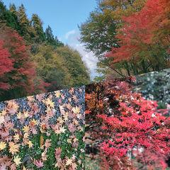 秋を満喫、ふふ日光後編、お詣、朝食、観光。