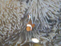 石垣島でマンタシュノーケルに行ってみたら①まずはお魚ポイント。