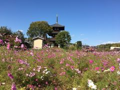 まほろばの 奈良の都には、 いにしえびとの想いがうずまく。