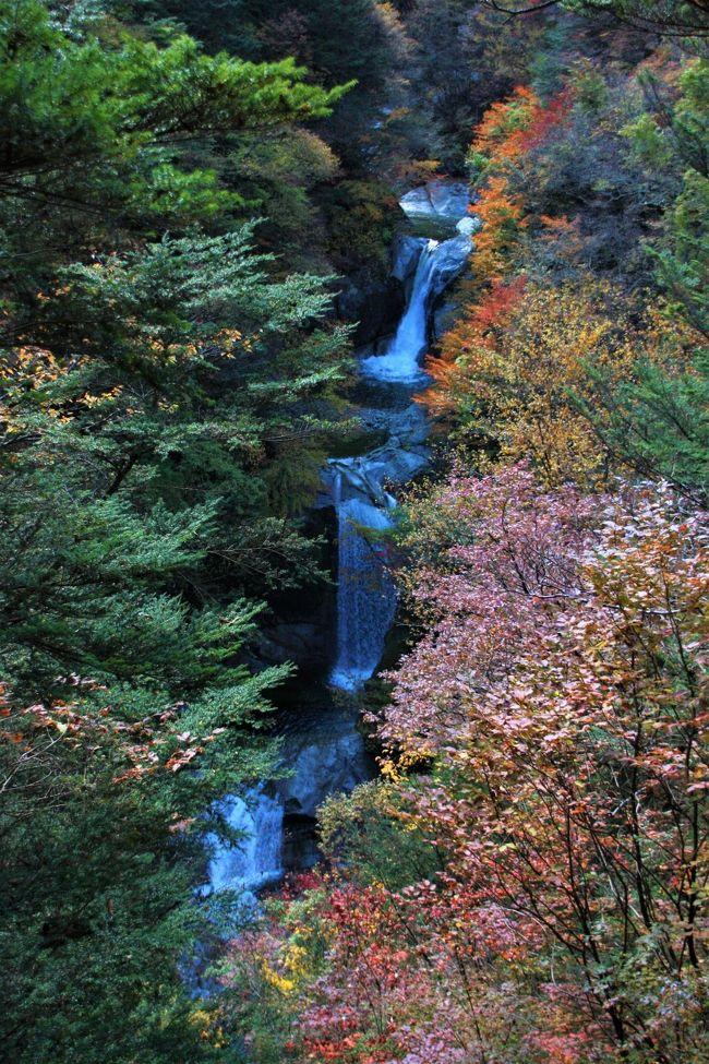 """約30年位前に訪れた「尾白川渓谷」にある名瀑""""神蛇滝""""の印象が今だに脳裏に残っており、紅葉の真っ盛り時に再会したく、老体に鞭打って再度、渓谷トレッキングして参りました~~~^^^"""