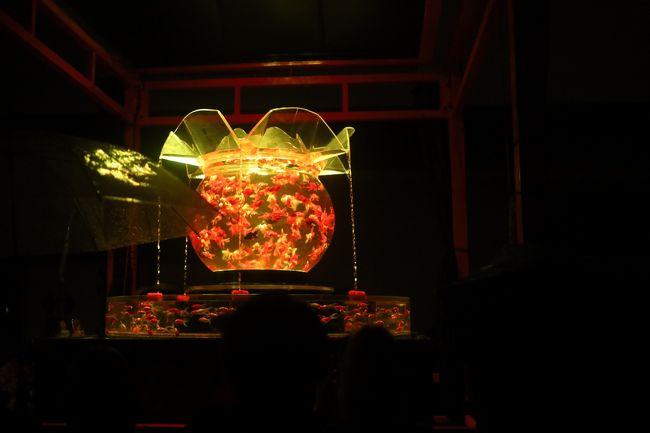 二条城の金魚アート<br />ライトアップと<br />大小の金魚鉢の<br />相性が抜群で<br />素晴らしい<br />時間を過ごす事が<br />できました。<br />