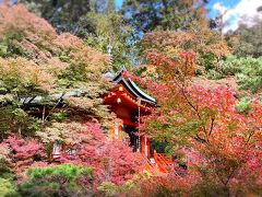 マイクロツーリズムを楽しもう in 山科 新しくできたロマンの森&紅葉前の毘沙門堂