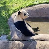 パンダに会いに和歌山へ(*^▽^*) Vol.2 おっさん過ぎるパンダ!絶対中にだれか入ってる(^^;)