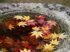 20201110-1 京都 三尾エリアの紅葉巡り其の一、高雄山神護寺