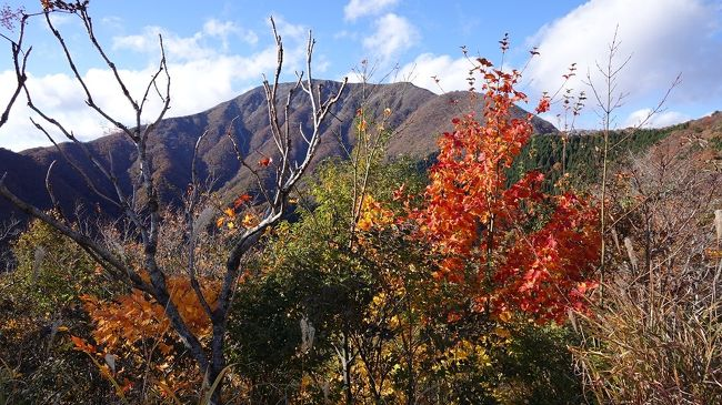 伊吹山と木之本石道寺の紅葉を巡る旅